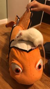 Pearl Riding Nemo
